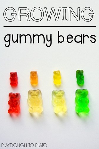 Grow Giant Gummy Bears